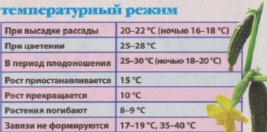 На рисунке представлена таблица температурного режима для выращивания огурцов в теплице