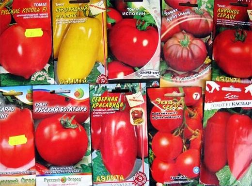 На снимке разные семена тепличных помидоров