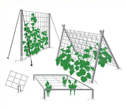 На рисунке изображены различные варианты сеток для огурцов