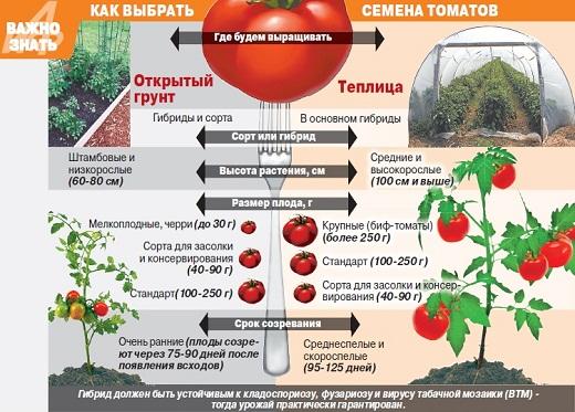 На рисунке представлена схема для удобства выбора семян помидоров