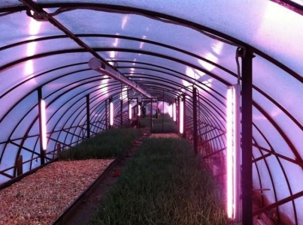 Освещение теплицы энергосберегающими лампами