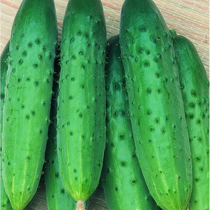 semena-ogurcov-dlya-teplic-1