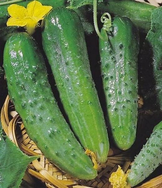 semena-ogurcov-dlya-teplic-4