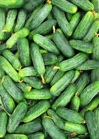 semena-ogurcov-dlya-teplic-8